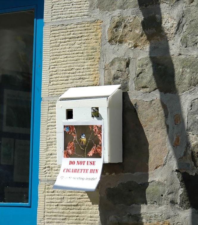 ninhos-de-pássaros-lugares-incomuns (12)
