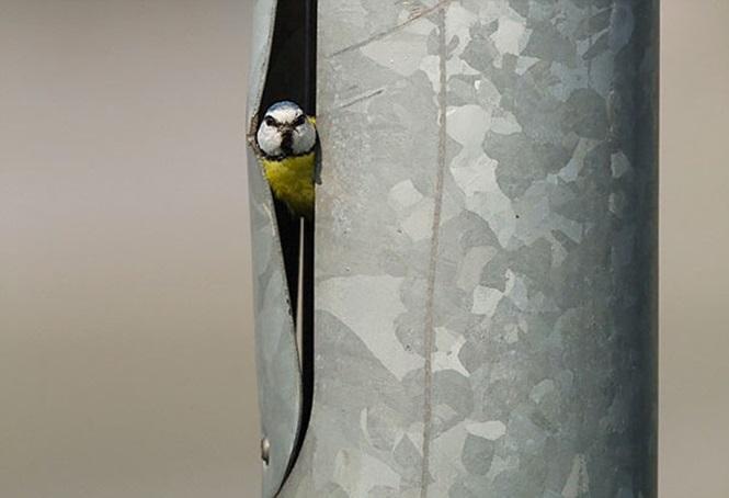 ninhos-de-pássaros-lugares-incomuns (14)