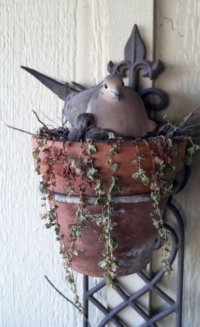 ninhos-de-pássaros-lugares-incomuns (16)