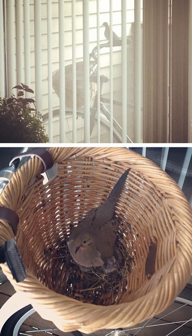 ninhos-de-pássaros-lugares-incomuns (17)