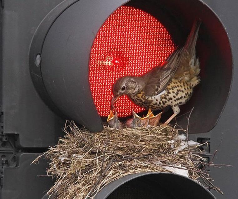 18 ninhos de pássaros feitos em lugares bem incomuns