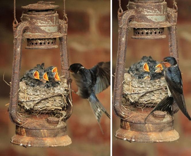 ninhos-de-pássaros-lugares-incomuns (2)