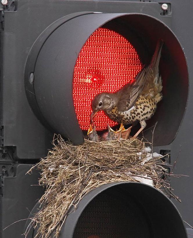 ninhos-de-pássaros-lugares-incomuns (3)