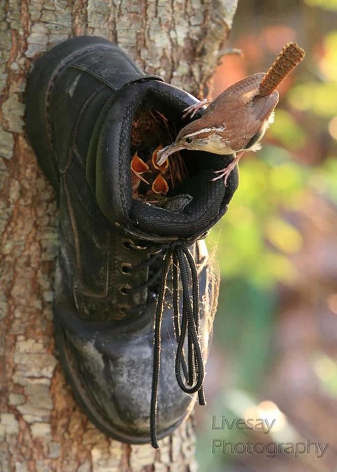 ninhos-de-pássaros-lugares-incomuns (4)