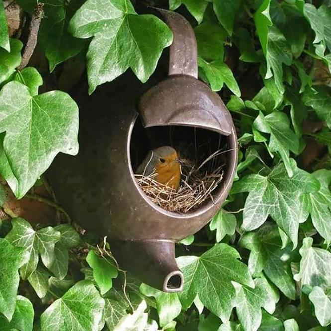 ninhos-de-pássaros-lugares-incomuns (6)