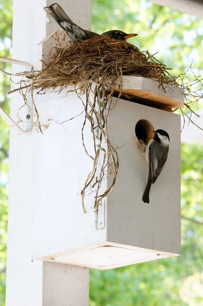 ninhos-de-pássaros-lugares-incomuns (9)