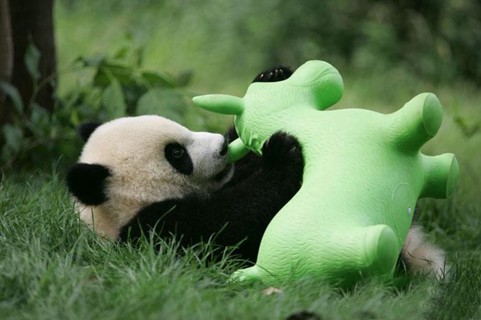 Creche para pandas na China é o lugar mais adorável da Terra (18)
