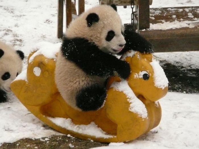 Creche para pandas na China é o lugar mais adorável da Terra (4)
