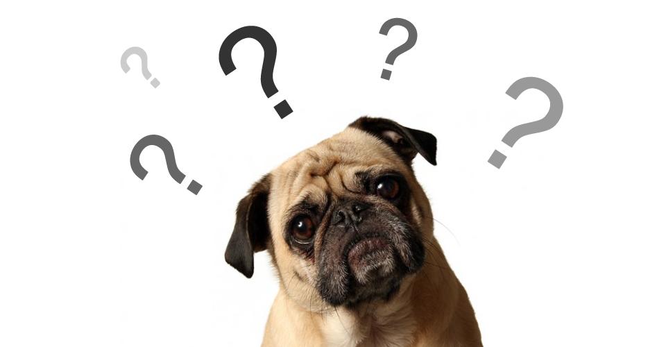 Nomes para Cachorros – 7 Dicas para o Nome Perfeito