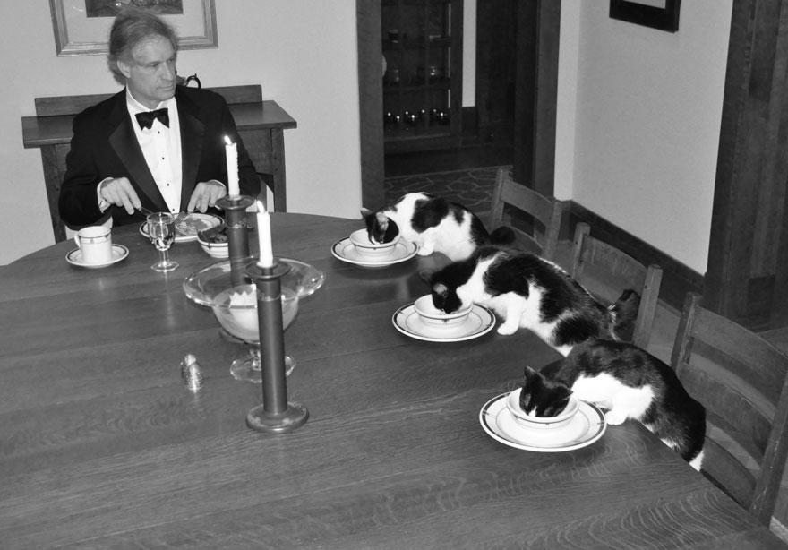 Homem tem jantares secretos com gatos