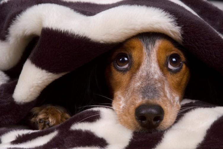 5 coisas que os cães pressentem antes de acontecer