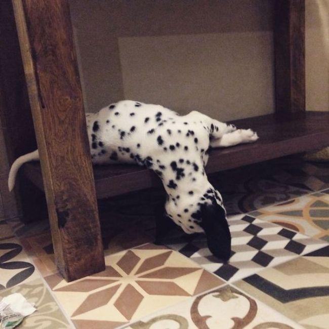 filhotes-de-cachorro-dormem-em-qualquer-lugar (2)
