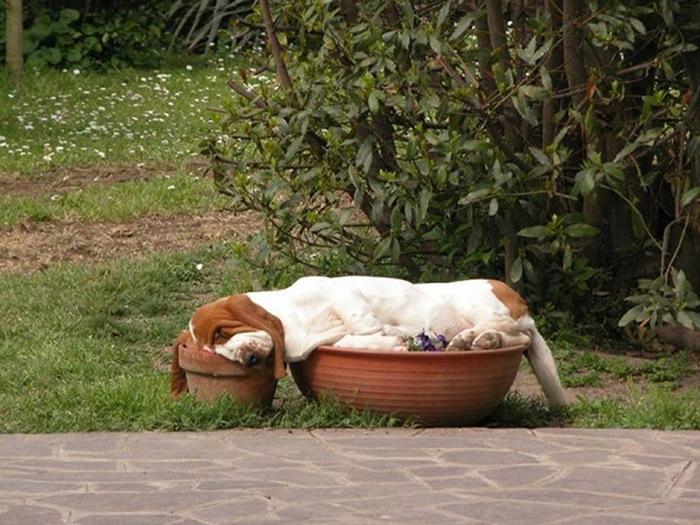 filhotes-de-cachorro-dormem-em-qualquer-lugar (31)