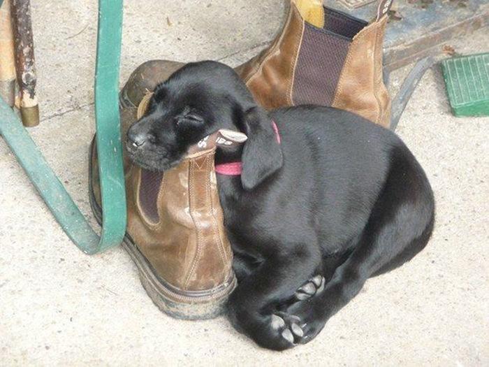 filhotes-de-cachorro-dormem-em-qualquer-lugar (7)