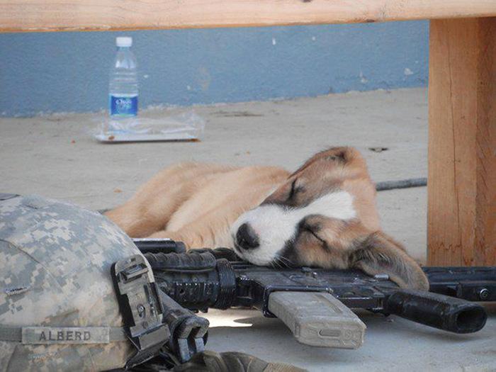 filhotes-de-cachorro-dormem-em-qualquer-lugar (9)