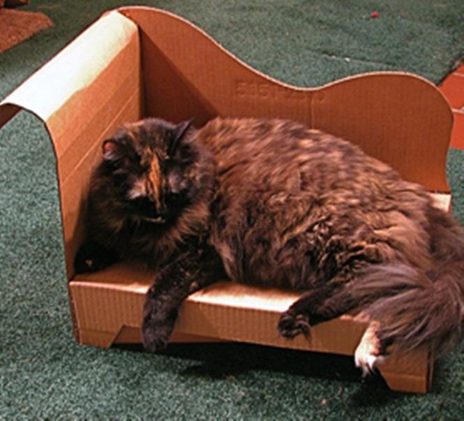 ideias-criativas-de-casinhas-de-papelão-para-gatos (12)