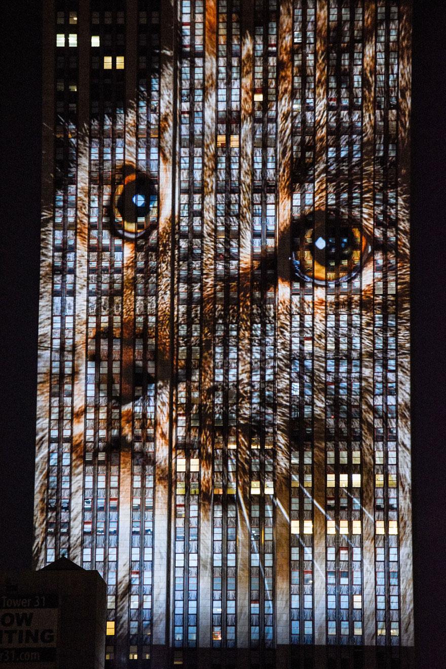 Leão Cecil é projetado no Empire State Building (11)