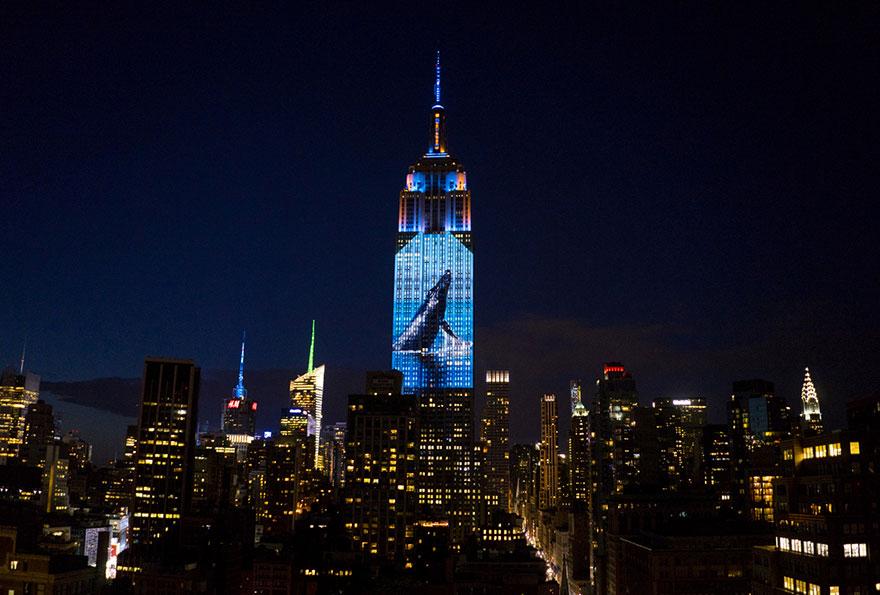 Leão Cecil é projetado no Empire State Building (3)