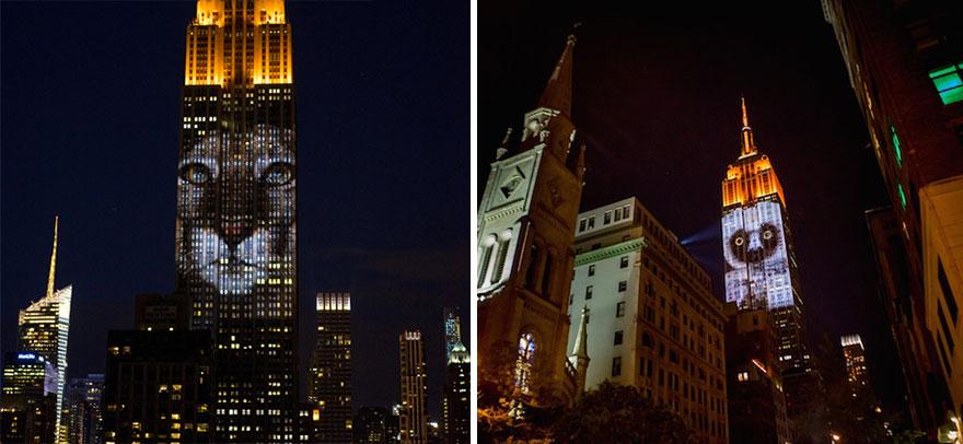Leão Cecil é projetado no Empire State Building (9)
