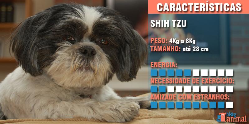 cachorros para apartamento - shih tzu