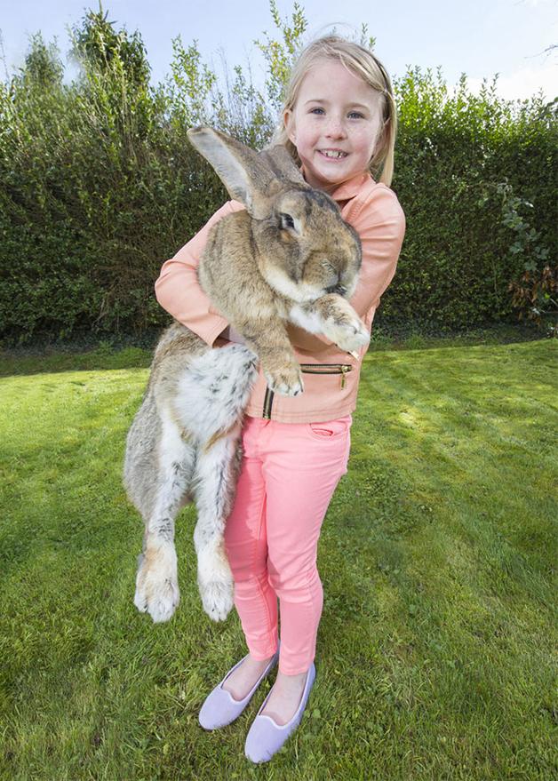Darius-o-maior-coelho-do-mundo (2)