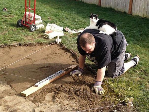 Imagens provam que gatos não se preocupam com seu espaço pessoal (1)