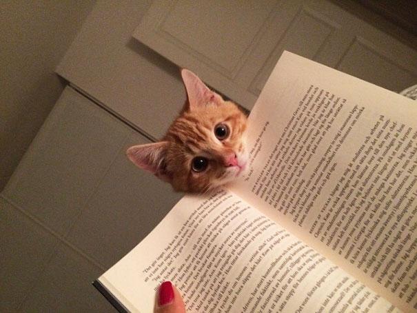 Imagens provam que gatos não se preocupam com seu espaço pessoal (10)