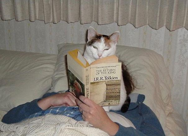 Imagens provam que gatos não se preocupam com seu espaço pessoal (7)