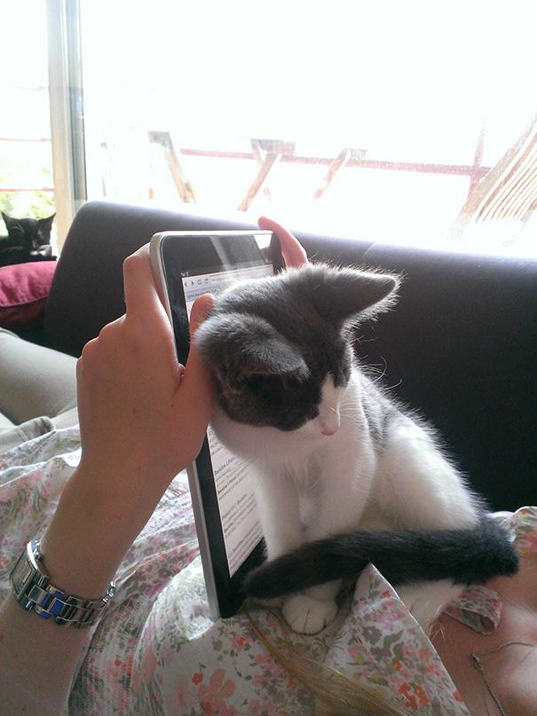Imagens provam que gatos não se preocupam com seu espaço pessoal (8)