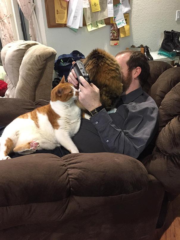 Imagens provam que gatos não se preocupam com seu espaço pessoal (9)