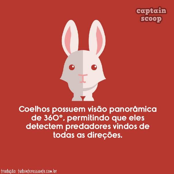 curiosidades-sobre-animais (7)