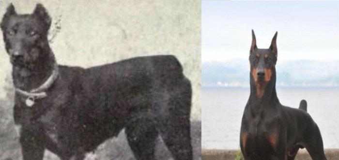 A evolução das raças de cães ao longo dos últimos 100 anos