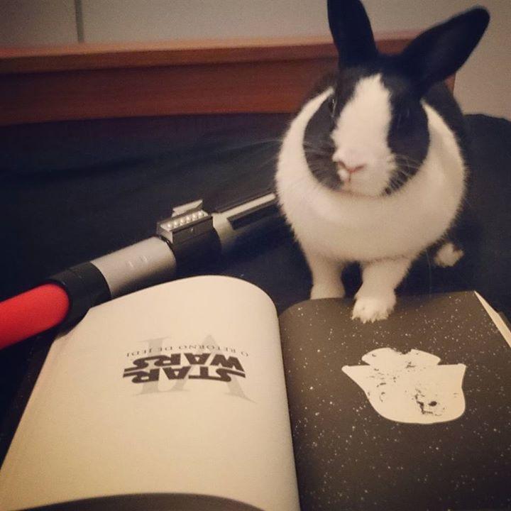 Amantes-de-livros-e-animais (10)