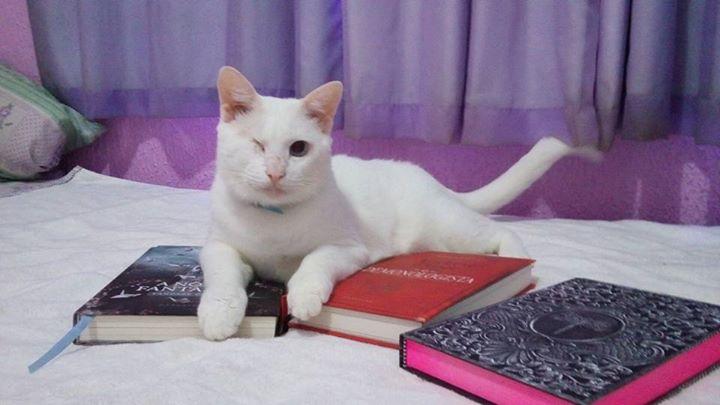 Amantes-de-livros-e-animais (13)