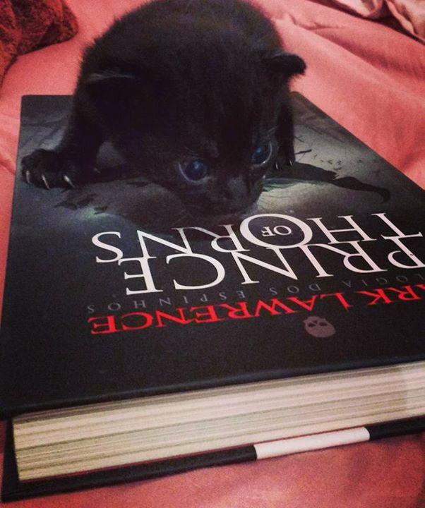 Amantes-de-livros-e-animais (14)