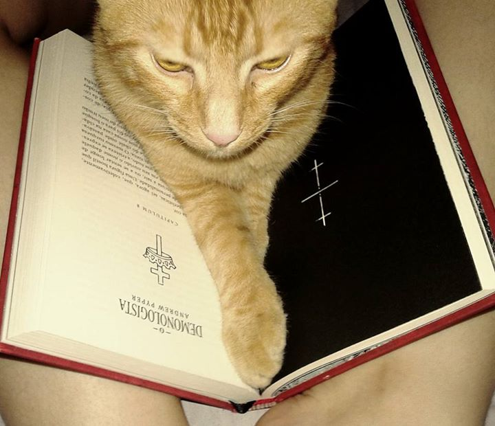 Amantes-de-livros-e-animais (3)