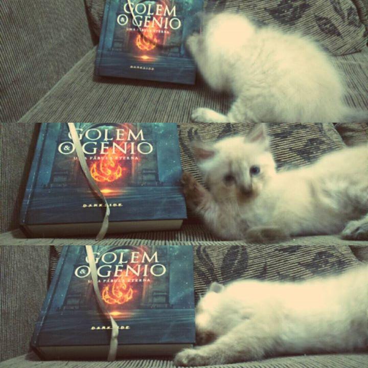 Amantes-de-livros-e-animais (37)