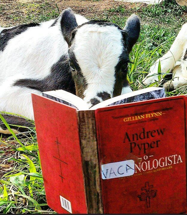 Amantes-de-livros-e-animais (41)