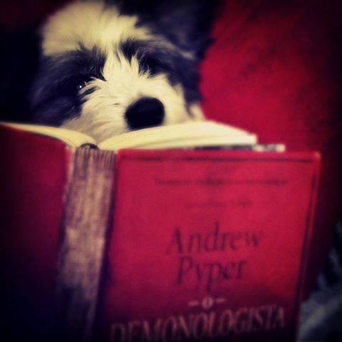 Amantes-de-livros-e-animais (45)