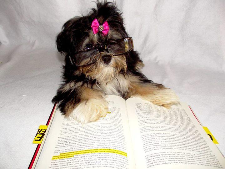 Amantes-de-livros-e-animais (47)