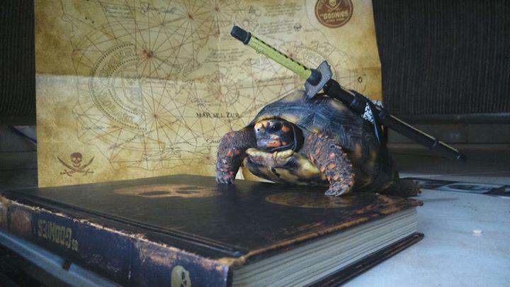 Amantes-de-livros-e-animais (6)