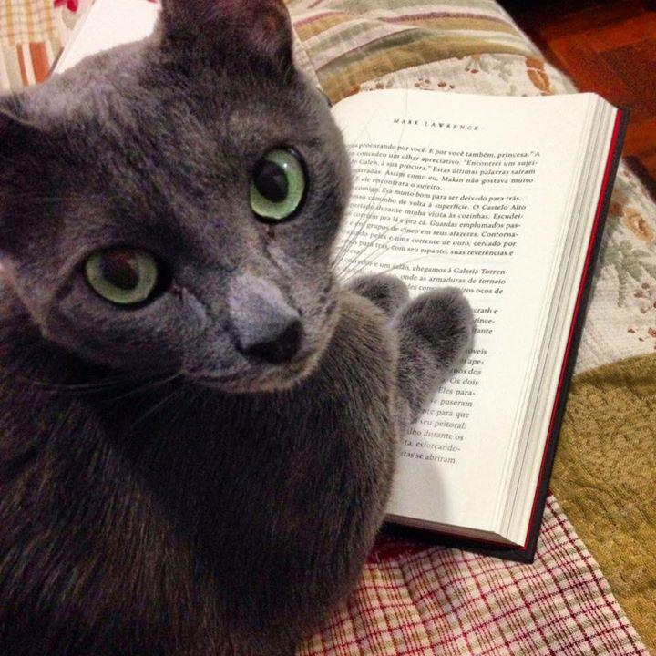 Amantes de livros e animais juntam as suas duas paixões em fotos fofas e divertidas