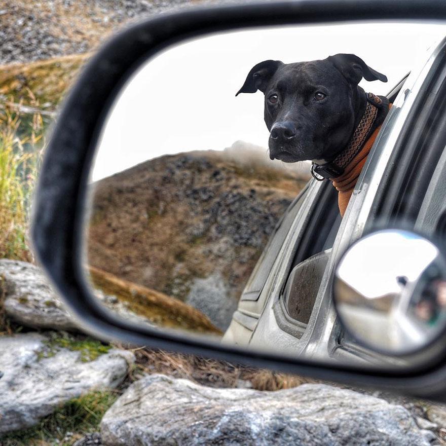 Rapaz vive em um caminhão e viaja com seu cachorro pelos Estados unidos (16)
