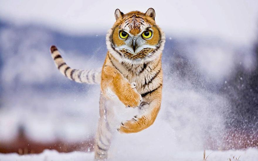 Animais híbridos feitos no Photoshop (23)