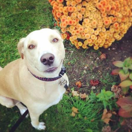 Cadela-fica-'decepcionada'-após-ser-devolvida (6)