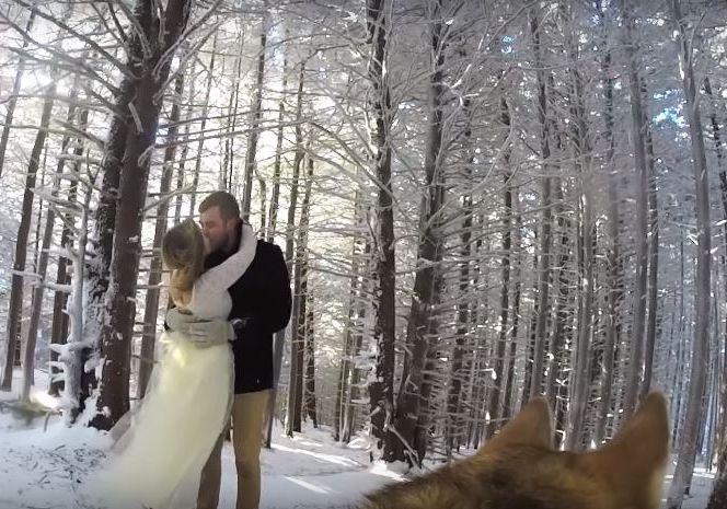 cachorro-para-filmar-seu-casamento
