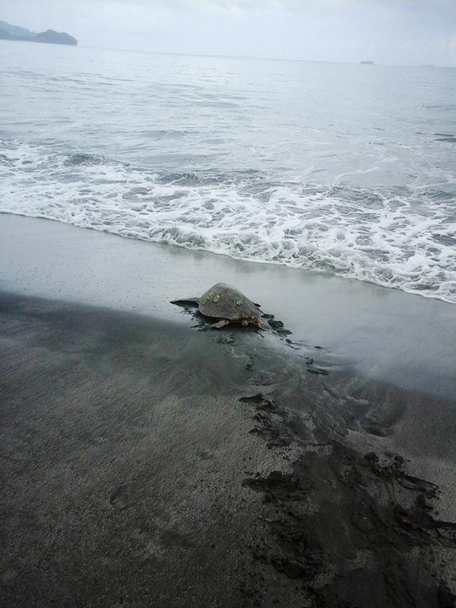 compra-tartarugas (3)