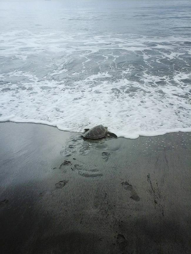 compra-tartarugas (4)