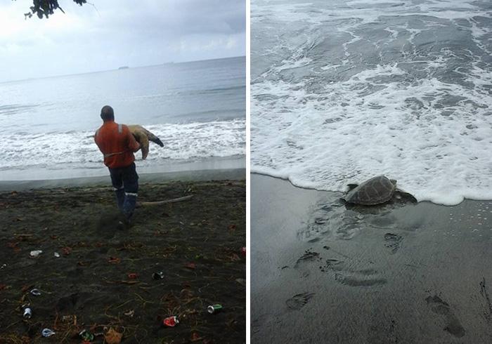 Homem compra tartarugas em mercado de alimentos e as devolve ao mar