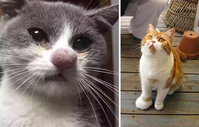 23 gatos depois de serem picados por abelhas